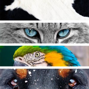 animals-1320240_960_720